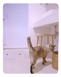 猫とインテリア